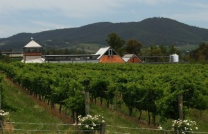 Melbourne wine tour - Rochford Wines Yarra Valley