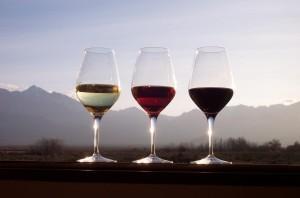 Coldstream Hills Yarra Valley - wine tasting